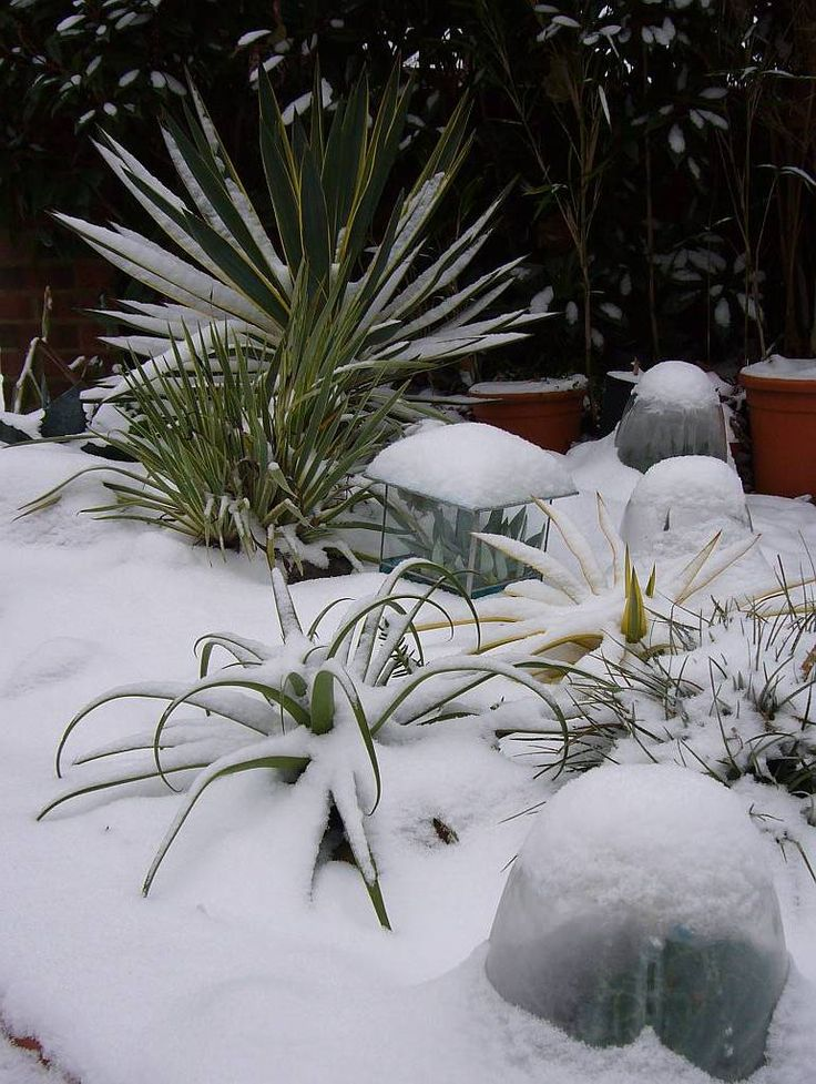 How To Care For Succulent Plants In The Winter Gardening