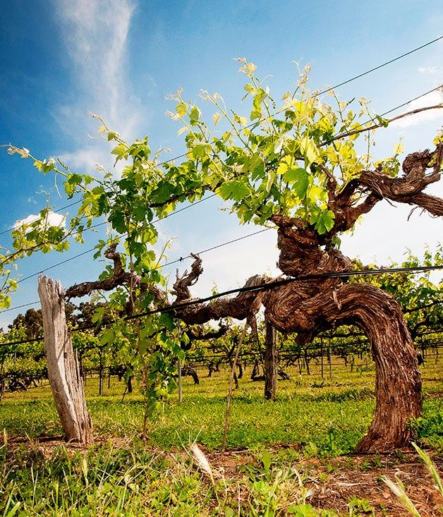 Great Australian Wine Drives: Clare Valley
