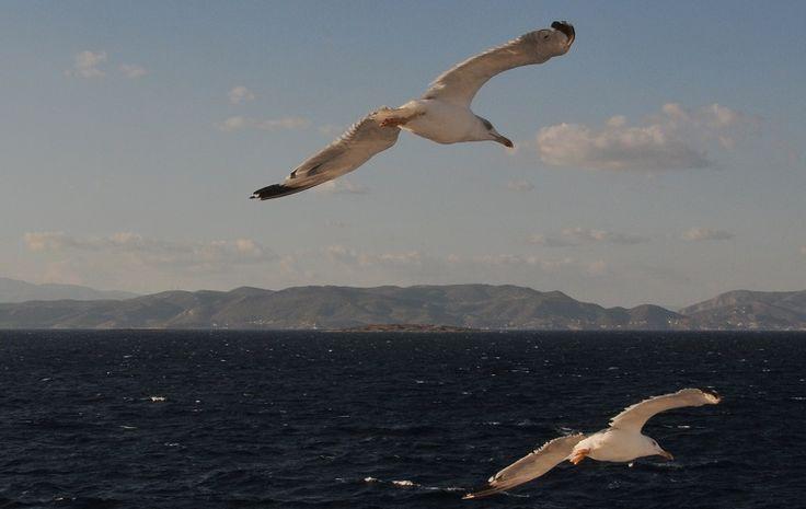 Ένα νοερό ταξίδι που ξεκινά καθημερινά στο πρώτο φως της μέρας και ο γλάρος ένα σύμβολο της ελληνικής ψυχής, που ελεύθερη πετά,…