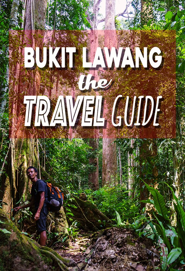 Planning to visit Bukit Lawang? What to do, where to stay, getting to Bukit Lawang, everything you need to know in THE Bukit Lawang Travel Guide.