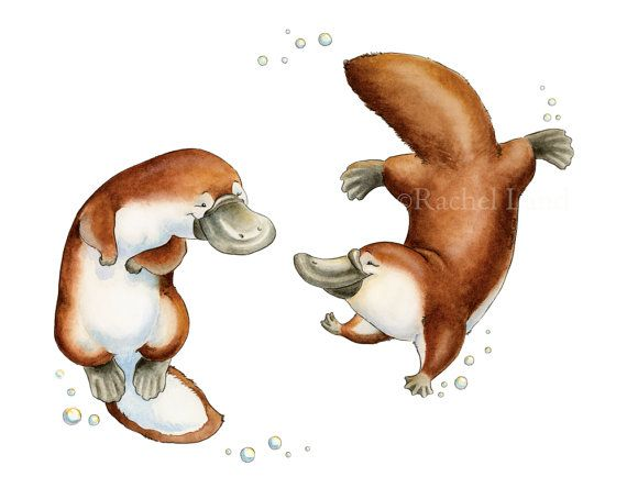Platypus Love, Platypus Art, Platypus Watercolor, Australian Animal, Australia Nursery, Australia Art, Platypus Nursery, Nursery Art