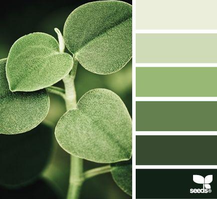 Différentes nuances de vert #vert #zen