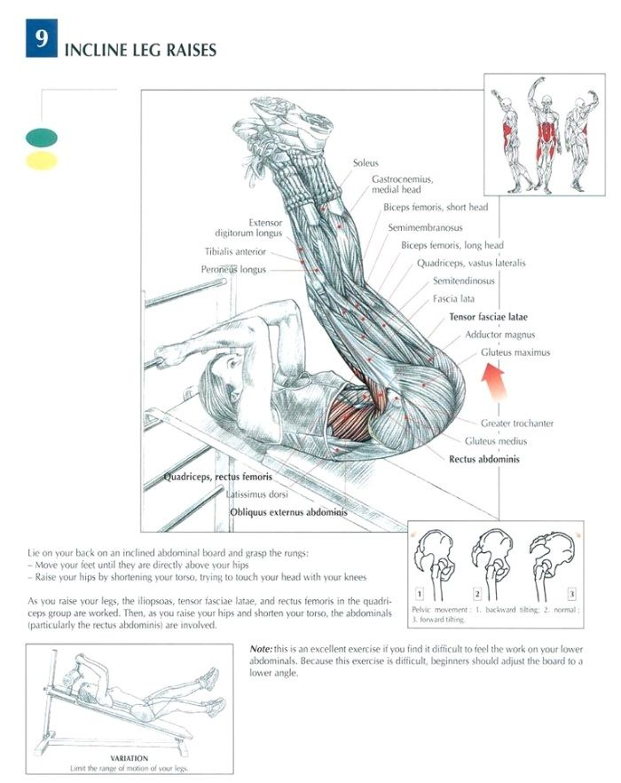 The ANATOMY Of Leg Raise. The leg raise is a strength training exercise which targets the iliopsoas (the interior hip flexors). This is an excellent exercis