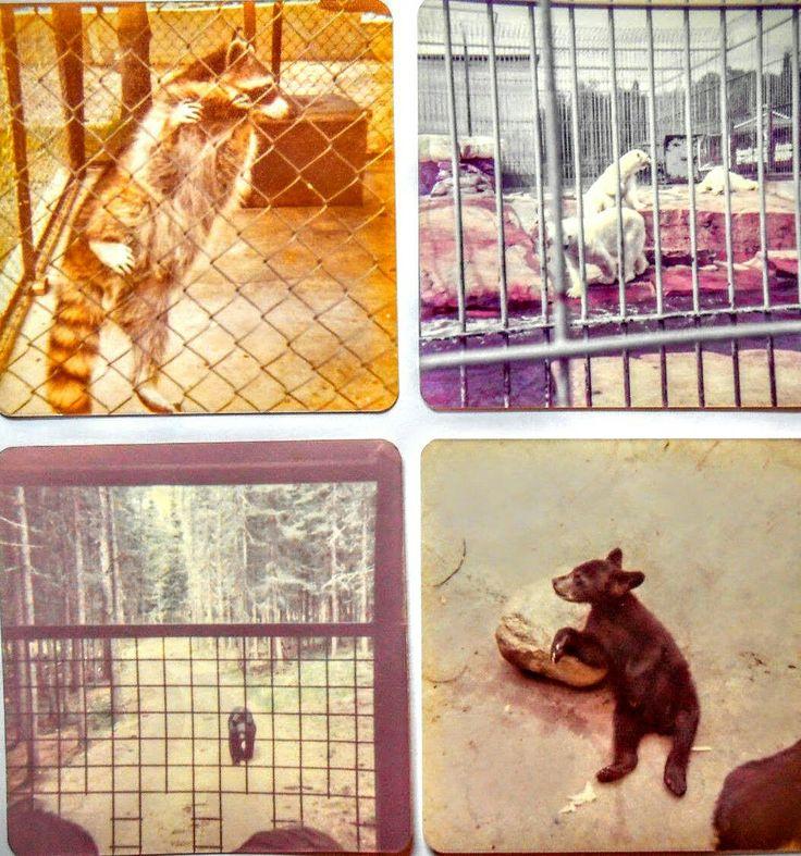 Ancien Enclos des animaux au Zoo de St-Félicien
