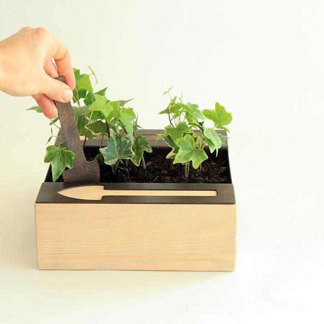 POLLICINA. #greenbox Il verde a portata di mano. Design @sudmisura  COSA NE PENSI? #trackdesign #corten #acciao #inostriprodotti #shoponline #green #greenbox #design #inspiration #cultivable #plants #cortenstee