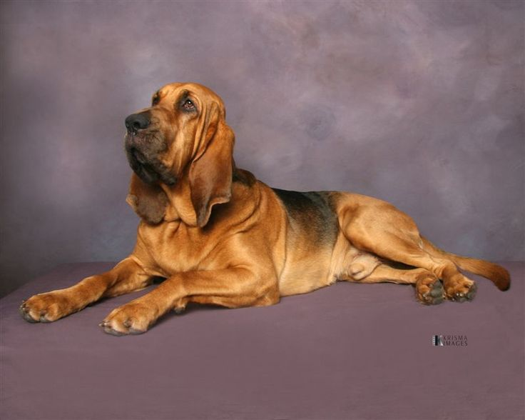 ** My bloodhound can trail a person who left a train station in the pouring rain three days ago and pick him out in a crowd of people. Now, can your dog do that? -- [Ole Red
