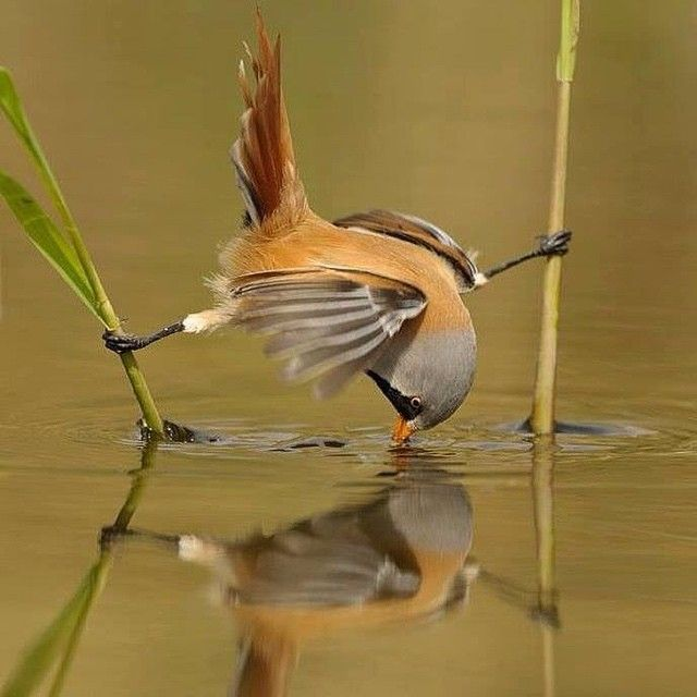 The artist .....#Amazing #Awesome #Cool #Colors #Magic #Majestic #Dream #Dreamers #Serenity #Zen #Lit #Life #Live #Love cl bob#Light #Hope #Harmony #Horizons #Idyll #Imagine #Inspired #Incredible #Follow #PhotOfTheDay #Wonderland #Fairytale #Sparrow #Bird #Artist #Mirror by gabriele_corno