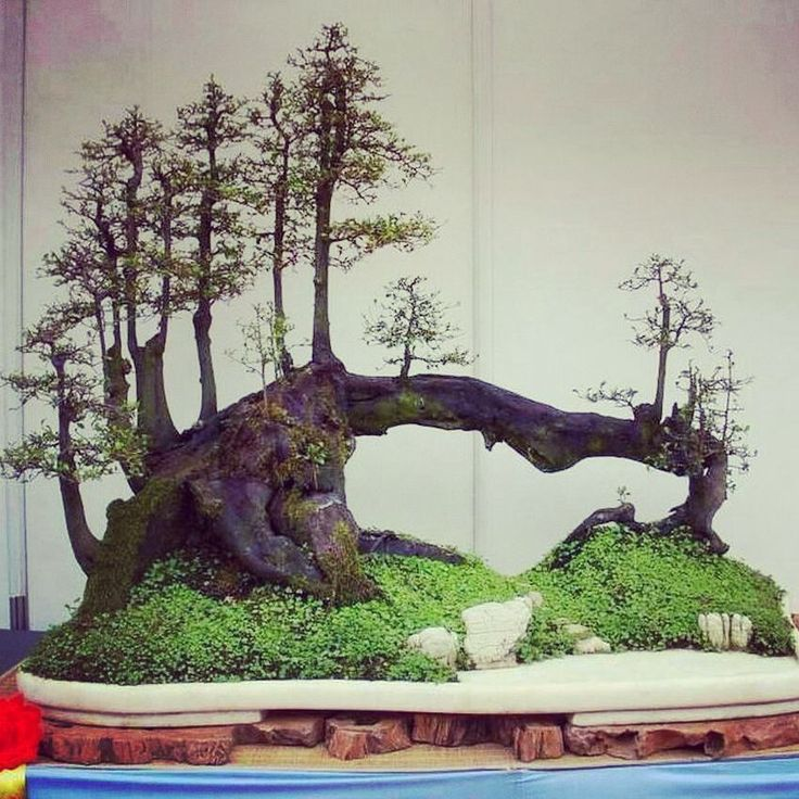 die 25 besten bonsai wald ideen auf pinterest mini. Black Bedroom Furniture Sets. Home Design Ideas