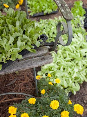 17 best images about gardens on pinterest gardens raised beds and small spaces - Country vegetable garden ideas ...