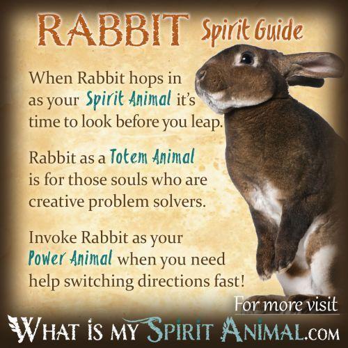 Rabbit Symbolism & Meaning animal spirit totem Native American