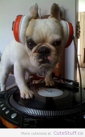 French bulldogs make the best DJs!