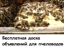 Проблема устойчивости клеща Varroa к лечебным препаратам