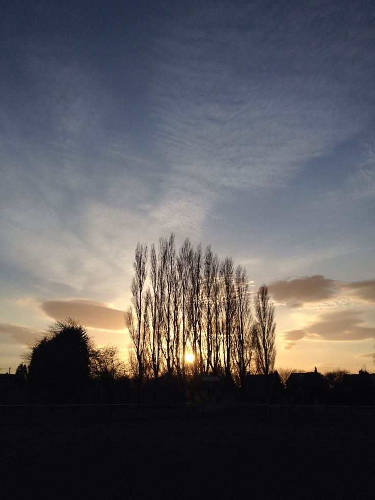 Poplars at Richmond Park, Burscough