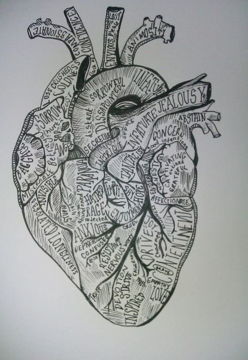 17 best ideas about anatomical heart drawing on pinterest | heart, Muscles