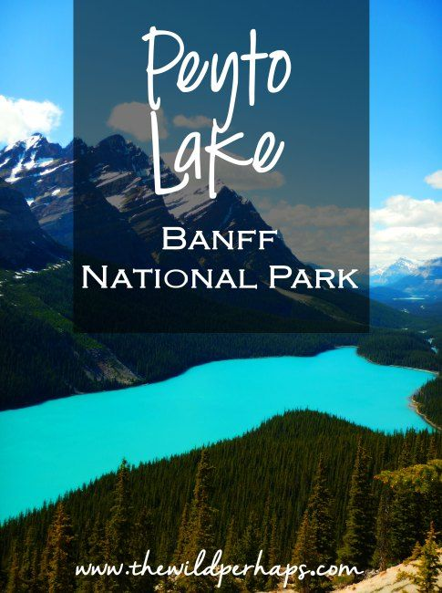 Alberta, Canada I Banff National Park I Peyto Lake