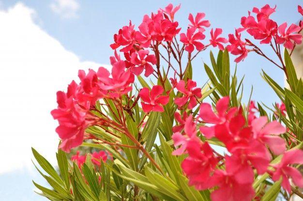 flores bonitas. flores bonitas naturalmente foto gratuita. flores ...
