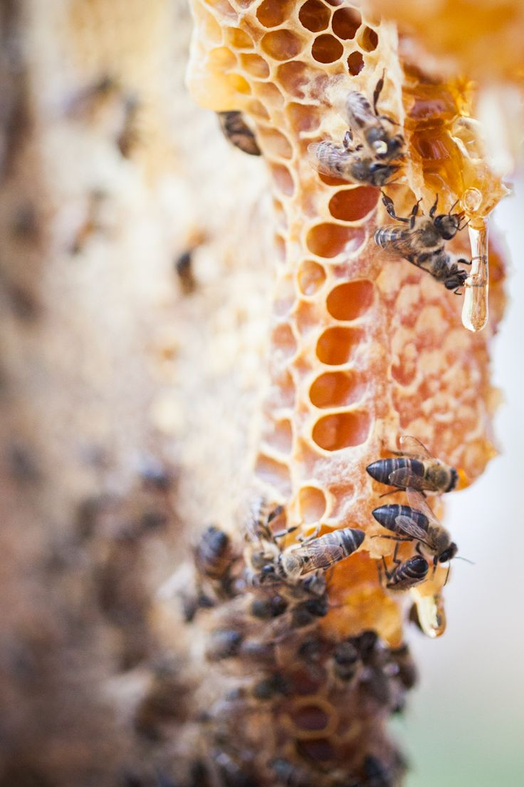 The Bee's Knees / Photographs @adel_ferreira / Production, Recipes & Styling: Maranda Engelbrecht / Location: Babylonstoren #honey #beekeeping