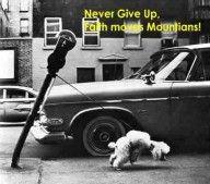 Gebe niemals auf!