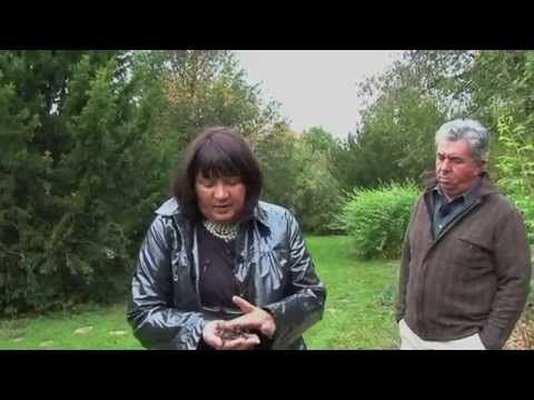Bois raméal fragmenté BRF explications de Lydia Bourguignon et Bernard Ronot - YouTube