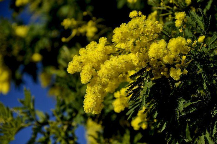 faire livrer un bouquet de fleurs à domicile 117 #fleurs #bouquet