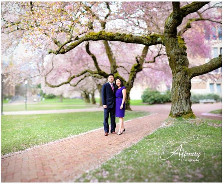 Cherry Blossoms at the University of Washington. The Brenizer Method...