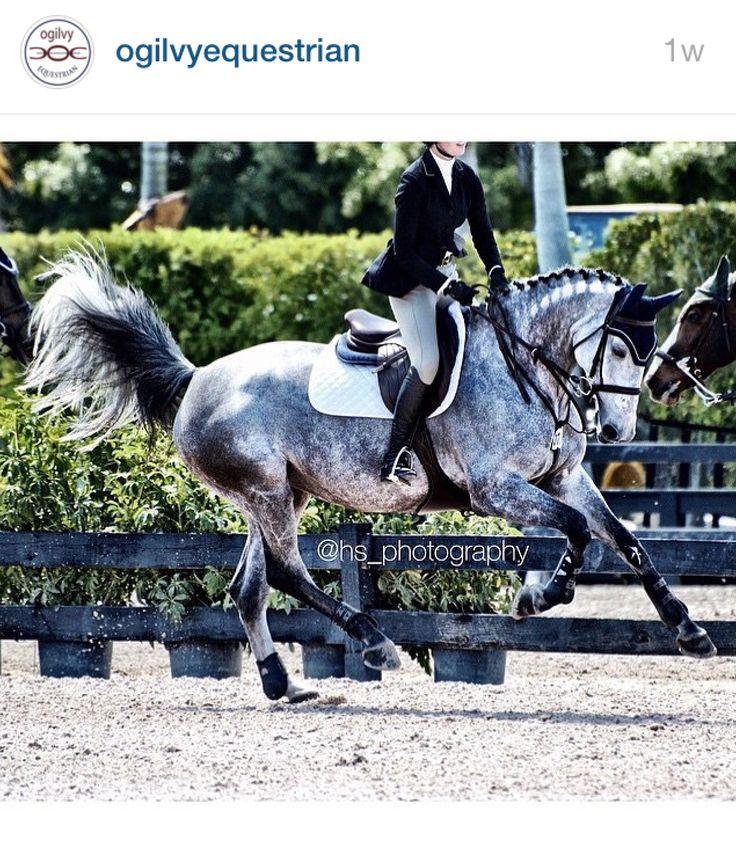 Ogilvy Equestrian, halfpad, saddle pad, horse show, horse, show jumping, riding, fashion, tack www.ogilvyequestrian.com