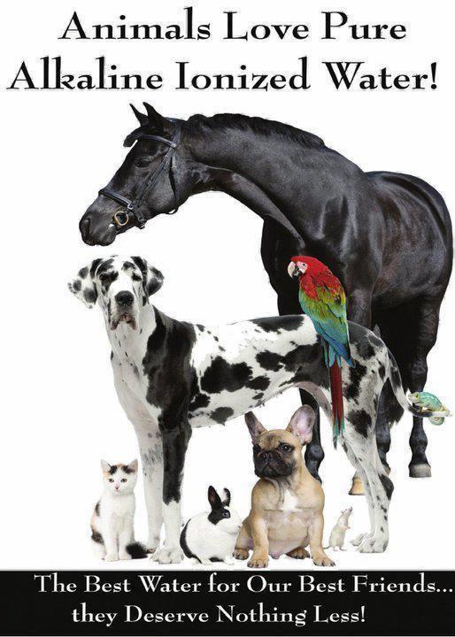 Pets Love Kangen Water