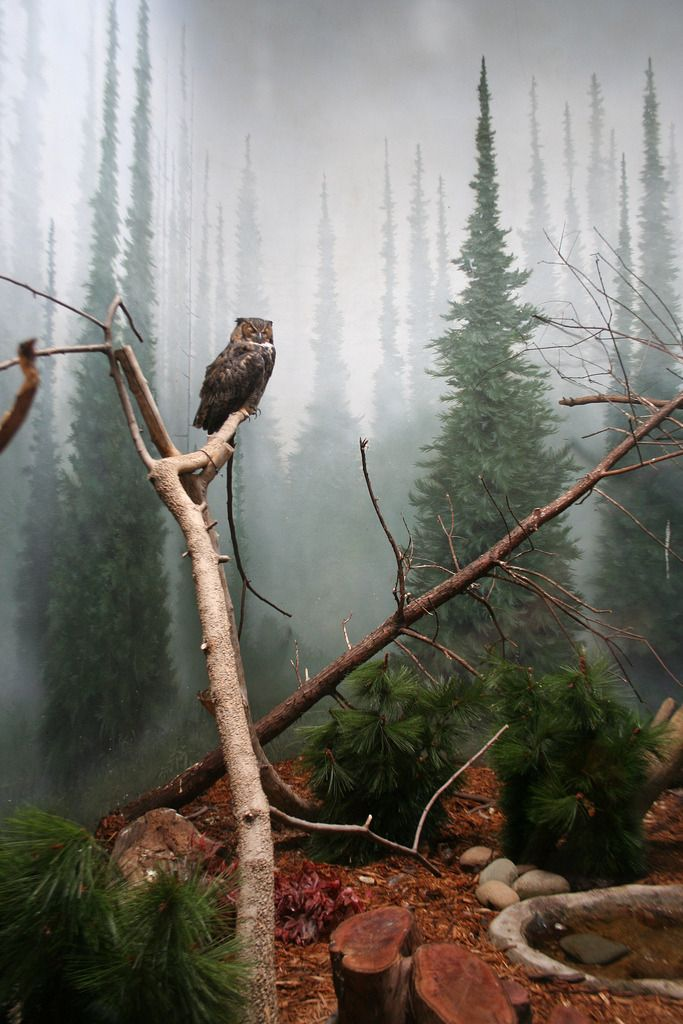 ow on a tree in a misty forest