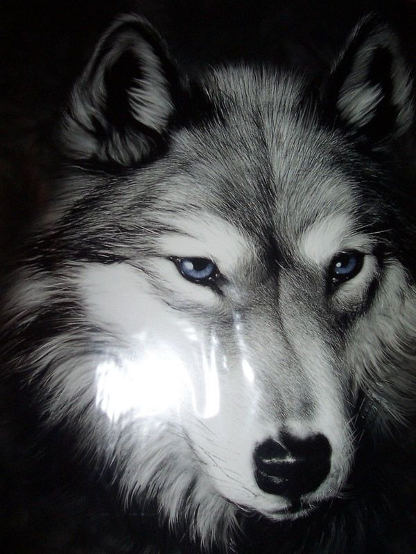 Poster preto e branco da cara de Lobo