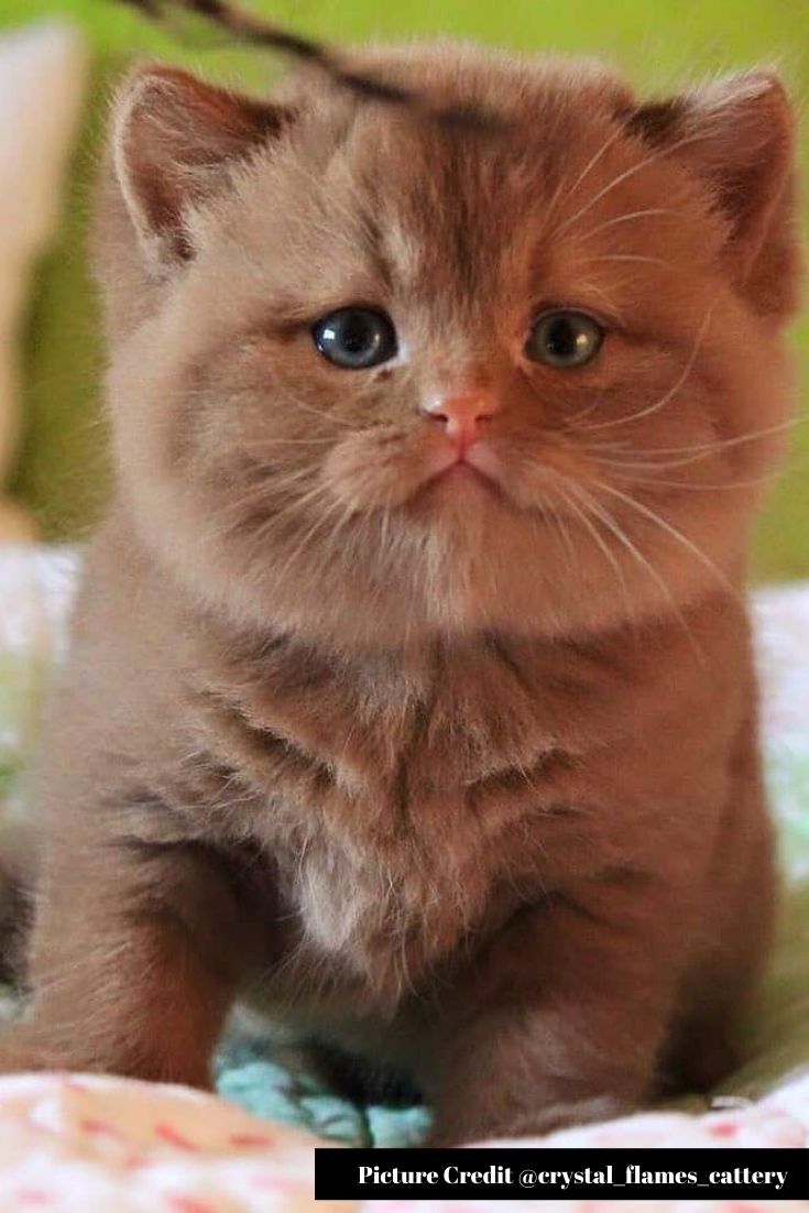 Adorable 50 Little Cute Cats That Would Make You Say Aww Gatos Frases Positivas Frases