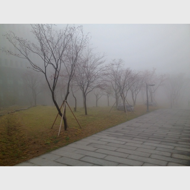 #Yongberia