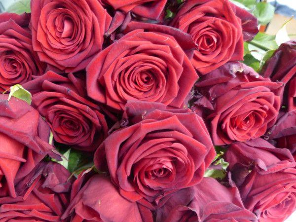 34 best anniversary flowers images on pinterest anniversary