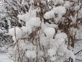 Zarte Schneehäufchen auf feinen Ästen --- Soft snow piles on fine branches