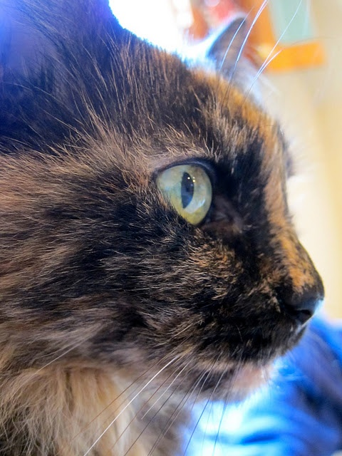 We have two very sweet black tortoiseshell cats names Mocha and Sugar.