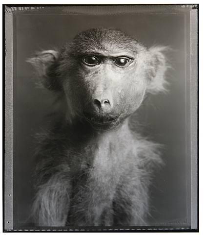 Google Image Result for http://www.artnet.com/artwork_images_423794977_501756_bettina-rheims.jpg