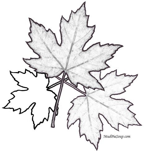 Autumn Leaf Coloring Page