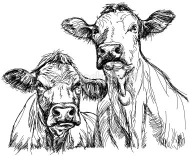 two cows Royalty Free Stock Vector Art Illustration