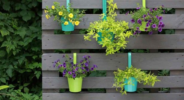 Flora Press/Oredia