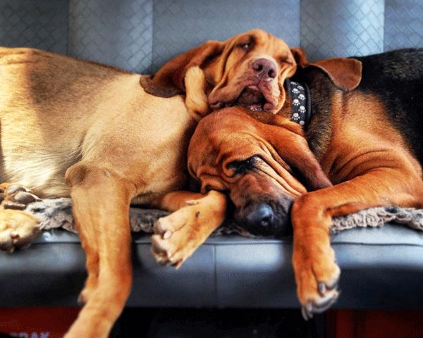 A Bloodhound To Die For 2534 best image...