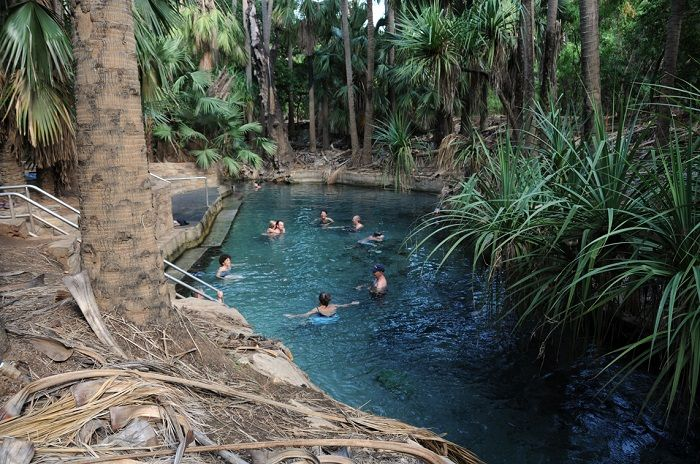 Take a dip in the Mataranka Hot Springs on one of our tours in the Northern Territory