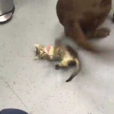 Liebenswerte Katze – Katzen