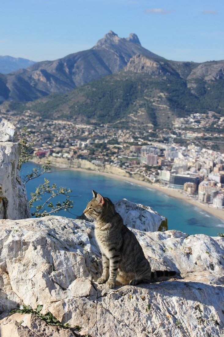 CAT ENJOYING THE SEA BREEZE AND VIEW .