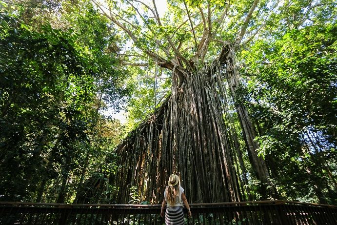 Despite its beauty, the Curtain Fig Tree in the Atherton Tablelands can be a nightmare to photograph well! Check out our list of tips and tricks on how to Instagram like a #boss in Tropical North Queensland #thisisqueensland