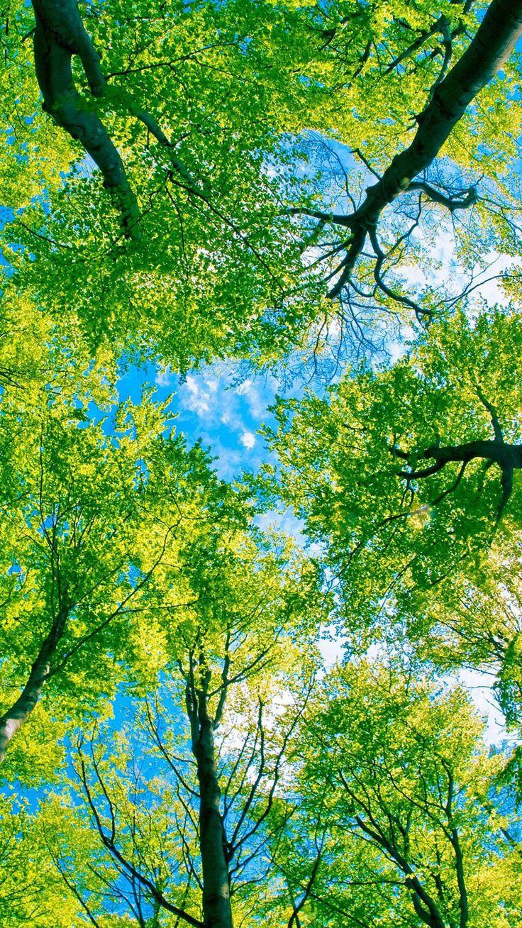Looking Up At Green Trees Android Wallpaper Phong cảnh
