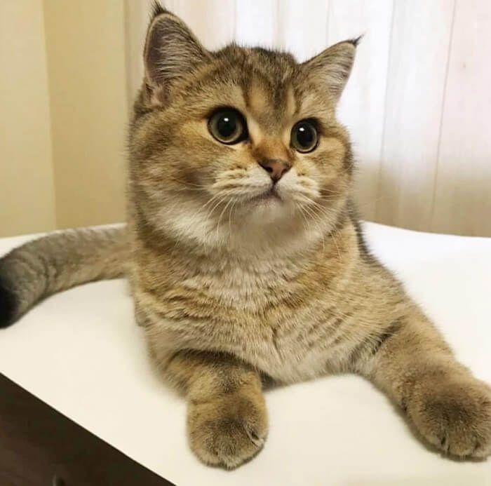 300 Regal Cat Names Cat Names Pretty Cats Cats