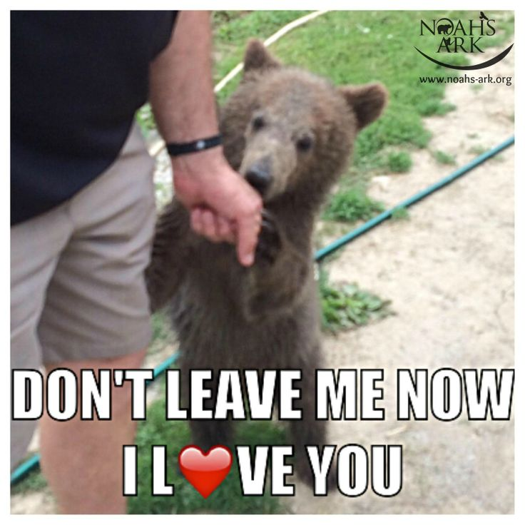 animal love meme - photo #7