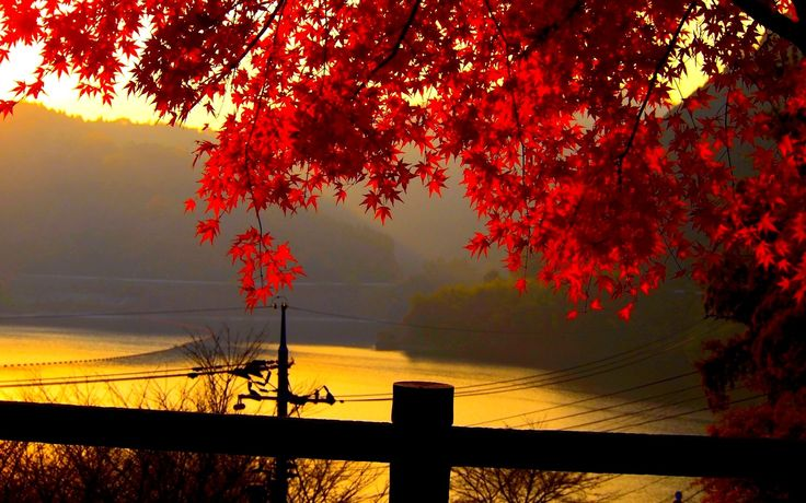 fall free images wallpaper