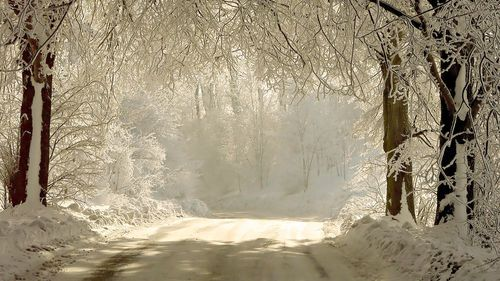 Winter Wonderland: Winter Snow, Paths, Christmas Photo, Winter Trees, Beautiful, Winter Wonderland, White Christmas, Outdoor Christmas