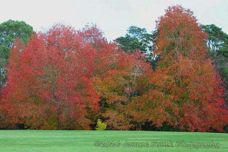 Trees of colour