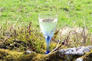 Birkensaft selber zapfen – das How-to | BIORAMA